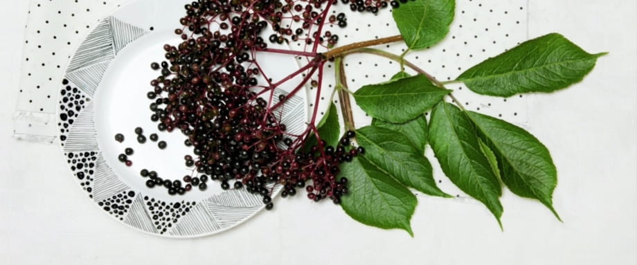 All About Elderberry