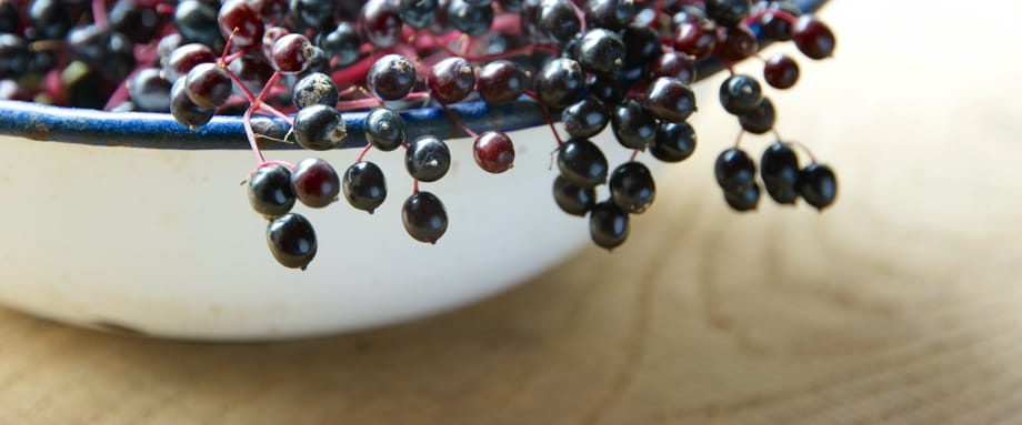 Elderberry and Anthocyanins